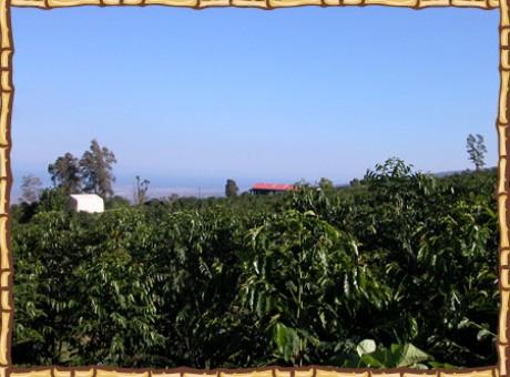 photo_farm