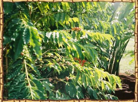 photo_tree2