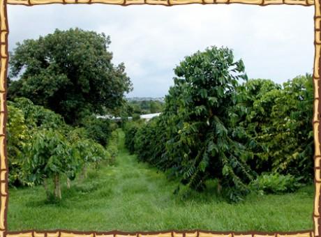 photo_trees